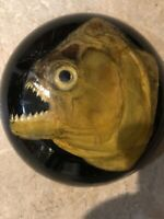 -- PIRANHA -- Fish HEAD Taxidermy Paperweight BRASIL