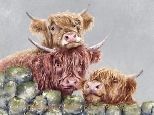 Highland cow  canvas print by Jane Bannon