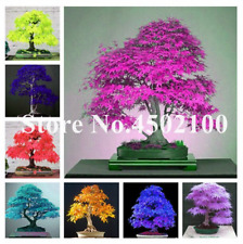 20 Pcs Seeds Japanese Pink Maple Bonsai Tree Garden Plants Free Shipping 2019 N