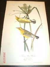 Audubon's Birds of America 1st Edition - Plate No. 97 - PRAIRIE WOOD WARBLER