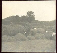 photo ancienne Fenaison au Val d'Ajol  Vosges