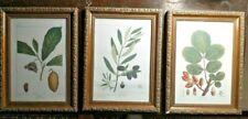 Set of 3 Framed Botanical Prints: Olive Tree, Paw Paw, Pistacia Tree Bombay Co