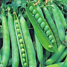Vegetable Pea Hurst Greenshaft Appx 400 seeds Early Maincrop