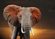 A1 | Elephant Poster Print 60 x 90cm 180gsm African Jungle Animal Art #16090