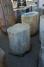 300 POUND POLISHED PETRIFIED WOOD STUMP LARGE DEALER ALL SIZES GREAT DEALS