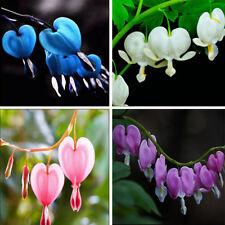 10Pcs Rare Spectabilis Herbs Dicentra Peony Plant Bleeding Heart Flower Seeds