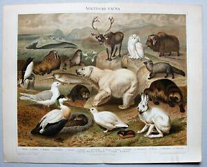 Fauna der Arktis - 18 Abbildungen - Chromolithographie um 1896