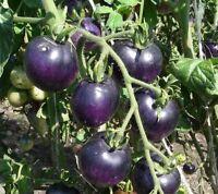 Tomato Seeds Purple Ukraine Heirloom Vegetable Seeds