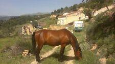 SPAIN LAND. farm land.PROPERTY IN SPAIN.farm land.house OVERSEAS PROPERTY.