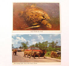 VTG Set of 2 Florida Safari Sea Turtle Lions West Palm Beach USA Postcard Old