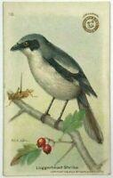1918 Arm & Hammer Useful Birds Of America Second Series No 18 Loggerhead Strike