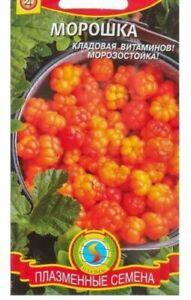 Cloudberry(Rubus chamaemorus) 8 seeds. Russian seeds