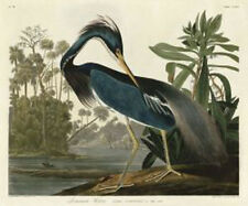 Louisiana Heron John James Audubon Wildlife Bird Nature Print Poster 11x14