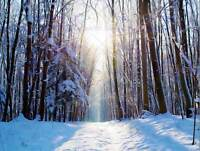 NATURE LANDSCAPE SNOW WINTER FOREST TREE SUN POSTER ART PRINT PICTURE BB1492B