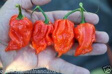 30  SEMI DI NAGA VIPER   il peperoncino  piccante very hot SEMI PURI + GUIDA