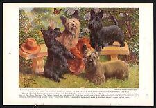 1936 Scottish and Skye Terrier Vintage Print Page Edward Herbert Miner Art