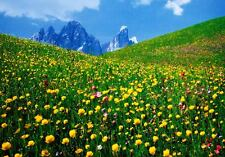 A valley of Flowers Dolomites poster Art Imprimé Image 48x69cm-sans frais de port