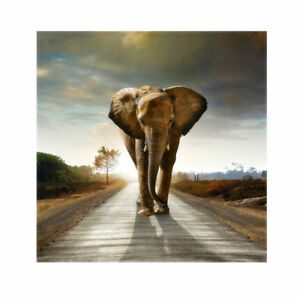 Modern Art Oil Painting Canvas Panel Wall Noframe Picture Deco Elephant 20cm