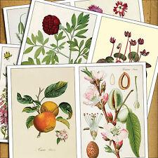 8 Vintage Victoriano botánico Ilustraciones Decoupage Muebles De Hierro En Transferencia