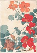 Postkarte / Postcard Art :  Tanigami - Große Kapuzinerkresse