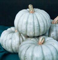 Heirloom JARRAHDALE Pumpkin 20 SEEDS Winter Squash Tasty Sweet Long Keeper