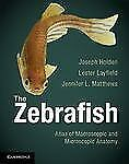 The Zebrafish: Atlas Of Macroscopic And Microscopic Anatomy: By Joseph A. Hol...
