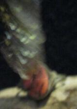 haunted ring item Talisman werewolf powers Angerboda lycanthrope riitual kit #3
