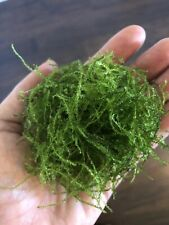 Java Moss Live High Quality Freshwater Vesicularia Easy Aquarium Plant