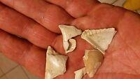 7 Avicula Phalenaceta Fossil Miocene Aquitanien