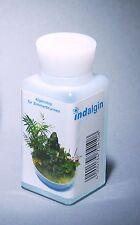Indalgin Anti-Algenmittel Algenstop für Zimmerbrunnen