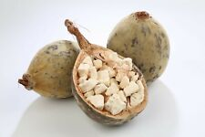 Baobab fruit 2 oz Product of Senegal