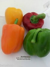 100 big  Sweet Pepper mixed Seeds Israeli capsicum Yellow Orange Red Green פילפל