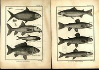 Fish Ichthyology c.1750-80's 18th century lot of 8 nice old prints