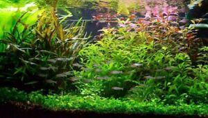 Lot aquarium de 30Plantes en 6 variétés à racines et tiges + 2 clado gratuite