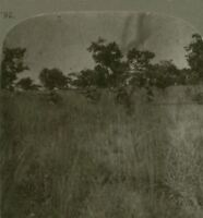 South African Infantry firing on the retreating Germans - WW1 Stereoview