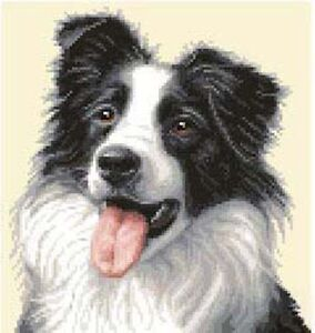 BORDER COLLIE dog - complete counted cross stitch sewing kit *Jann Designs