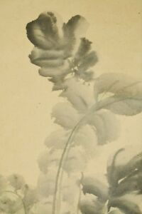 """JAPANESE PAINTING radish Hanging Scroll 73.8"""" OLD Antique Picture PIC Japan c015"""