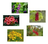 Frühlings-Spar-Angebot: 5 schöne winterharte Samensorten für den Blumengarten
