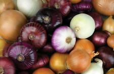 100 Onion Allium cepa Vegetable Seeds Mixed Perennial Green Plant Bonsai Grass