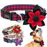 Big Flower Studded Dog Collars Small Medium Large Dogs Girl Necklace  Boxer Pink