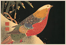 Japanese Art Print: Golden Pheasant in The Snow -  Fine Art Reproduction