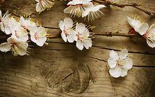 Framed Print-Bianco CHERRY BLOSSOM Fiori su legno (PICTURE POSTER Poppy ROSE)