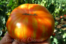 10 graines de tomate rare extravagante Solar Flare XL heirloom tomato seeds bio