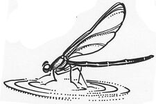 Unmounted Rubber Stamps, Dragonfly Stamps, Dragonflies, Insects, Water Dragonfly
