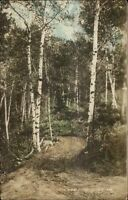 Antrim NH Birch Point c1915 Tinted Real Photo Postcard