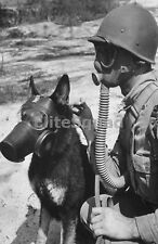 WW2 Photo Picture U.S. War Dog and Soldier with Gas Mask 244 DE