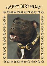 STAFFORDSHIRE BULL TERRIER DOG HEAD STUDY BIRTHDAY GREETINGS NOTE CARD