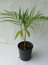 Loam Evergreen Medium Watering Plants, Seeds & Bulbs