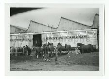 Clyde Beatty Circus - Vintage Snapshot - Various Circus Animals