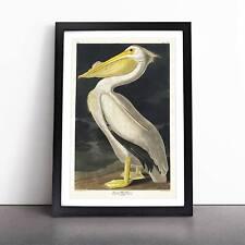 More details for american white pelican bird john james audubon framed picture print wall art